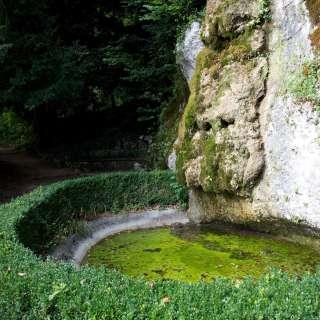 The Salamander Pond